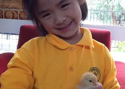Holding chicks 1