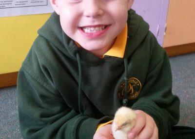 Holding chicks 3