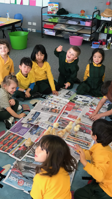 We need newspaper to catch all our poo!
